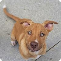 Adopt A Pet :: Billy & Benny - Dana Point, CA