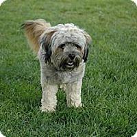 Adopt A Pet :: CAMERON - Mission Viejo, CA
