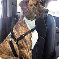 Adopt A Pet :: Finnick - Hollywood, FL