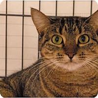 Adopt A Pet :: Ella - Lunenburg, MA