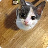 Adopt A Pet :: Ruby - Monroe, GA