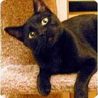 Adopt A Pet :: Kelsey - Irvine, CA