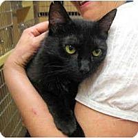 Adopt A Pet :: Corri - Colmar, PA