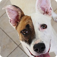Adopt A Pet :: Molly - Chapel Hill, NC