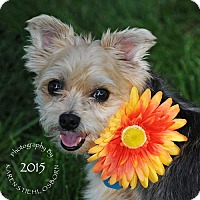 Adopt A Pet :: Dolly - Omaha, NE