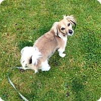 Adopt A Pet :: Lucky - Schaumburg, IL