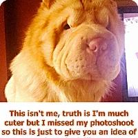 Adopt A Pet :: Marley - Portland, OR