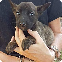 Adopt A Pet :: Clover - Uxbridge, MA