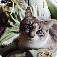 Adopt A Pet :: Agnes - Eagan, MN