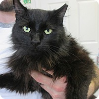 Adopt A Pet :: Mia - Bensalem, PA