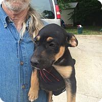 Adopt A Pet :: Marie - Hohenwald, TN