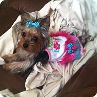 Adopt A Pet :: Chickie - Palm City, FL