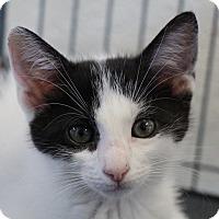 Adopt A Pet :: Cherie - Sarasota, FL