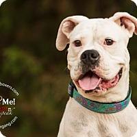 Adopt A Pet :: Dalahni - Hurst, TX