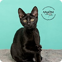 Adopt A Pet :: Batman - Cincinnati, OH