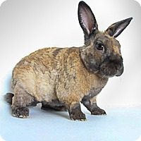Other/Unknown for adoption in Livermore, California - Prince Harry