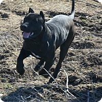 Adopt A Pet :: Wingman - Lancaster, KY
