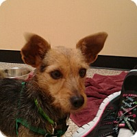 Adopt A Pet :: Izzie - Thousand Oaks, CA