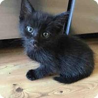 Adopt A Pet :: *DONOVAN - Camarillo, CA