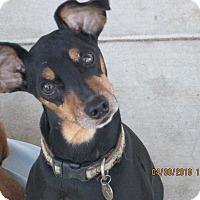 Adopt A Pet :: Tolliver - Blanchard, OK