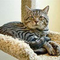 Adopt A Pet :: Butch - Coronado, CA