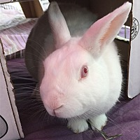 Adopt A Pet :: FREDDIE - San Clemente, CA