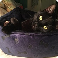 Adopt A Pet :: Isabella - Cleveland, OH