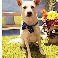 Adopt A Pet :: Riley - Castro Valley, CA