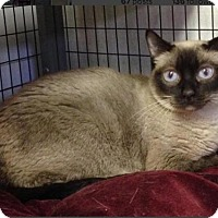 Adopt A Pet :: Mai Ling - Milwaukee, WI