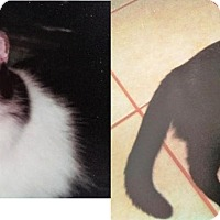 Adopt A Pet :: Misty and Minnie - Northfield, OH