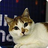 Adopt A Pet :: Taja - Mission, BC