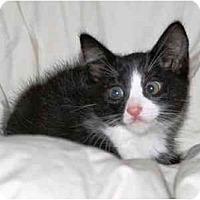Adopt A Pet :: Monkey - Irvine, CA