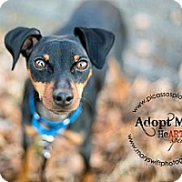 Adopt A Pet :: Crash - Myersville, MD