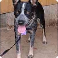 Adopt A Pet :: Jenny - Phoenix, AZ