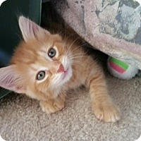 Adopt A Pet :: Tigger - Monroe, NC