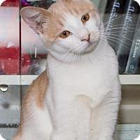 Adopt A Pet :: Logan - Philadelphia, PA