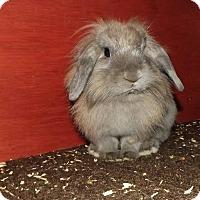 Adopt A Pet :: Josephine - Watauga, TX