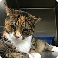 Adopt A Pet :: Katy - La Grange Park, IL
