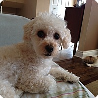 Adopt A Pet :: Rusty - Mississauga, ON