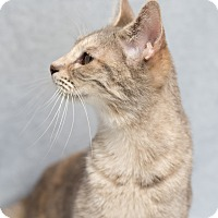 Adopt A Pet :: Rissa - Fort Collins, CO
