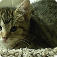 Adopt A Pet :: FONZIE - Acme, PA