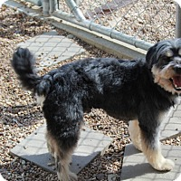 Adopt A Pet :: Bergdorf - Meet Him!! - Woonsocket, RI