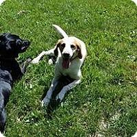 Adopt A Pet :: Edwin - Rexford, NY
