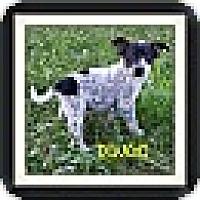 Adopt A Pet :: Dingo (DC) - Allentown, PA