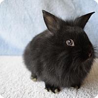 Adopt A Pet :: Clover - Fountain Valley, CA