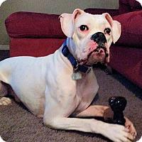 Adopt A Pet :: Noah - Boise, ID