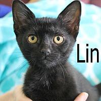Adopt A Pet :: Linus 2 - Wichita Falls, TX