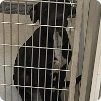 Adopt A Pet :: Able - Humble, TX