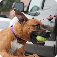 Adopt A Pet :: Aspen - Denver, CO