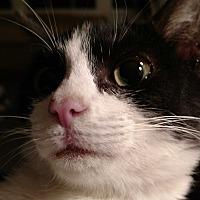 Adopt A Pet :: Wendy - Covington, PA